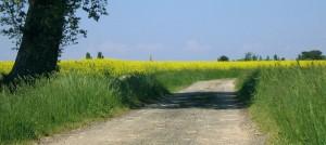 Chemin-campagne